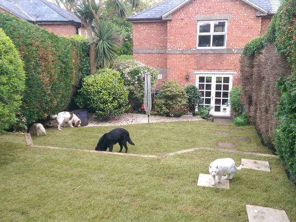 Housesitting assignment in Cobh, Ireland