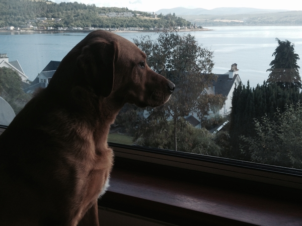 House/dog sit in picturesque Argyll, Scotland