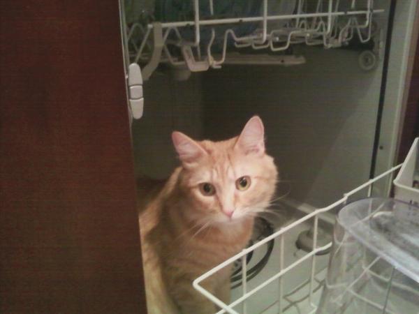 Need Cat Sitter near Washington, DC