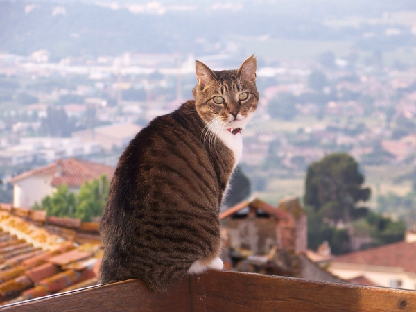 Two-cat apartment with sea view in old French village.