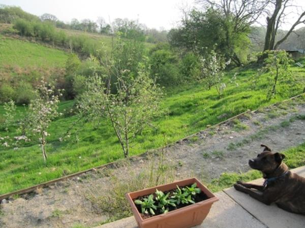 Smallholder sitter needed 22nd- 25th June / 16th - 18th July 2012