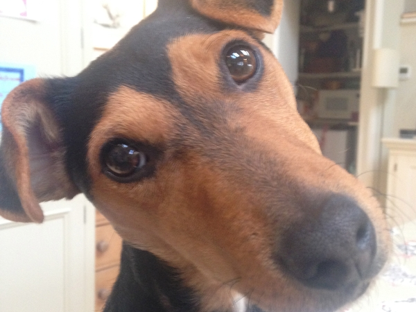 Pet Sitter needed for 2 terriers and 1 cat while we are on holiday