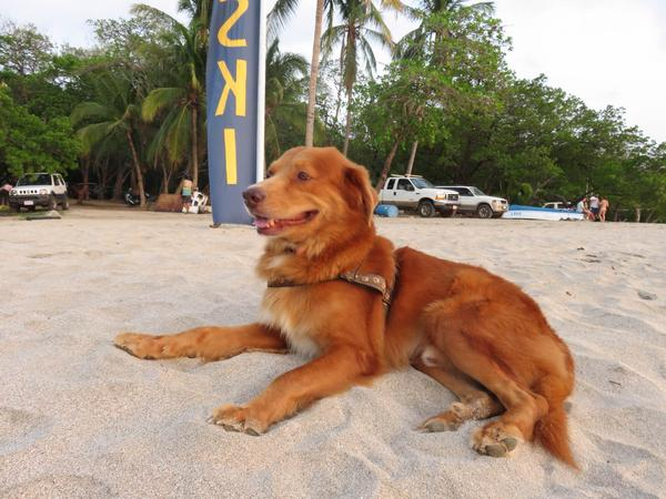 Dog/House sitter needed in Tamarindo, Guanacaste, Costa Rica for about 6 weeks in may/june 2018