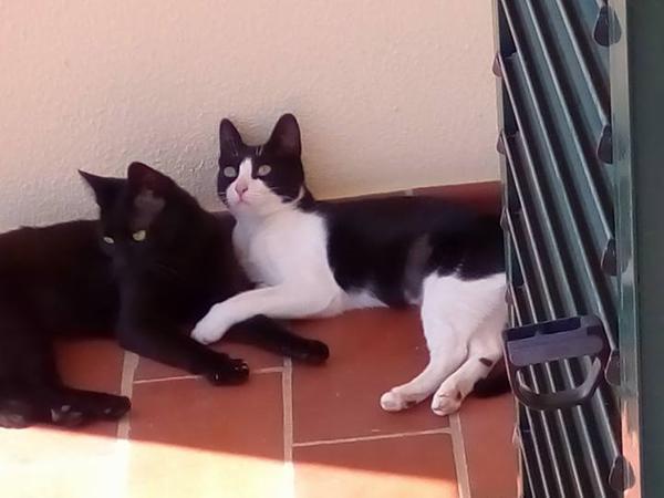 Kitten and house sitter