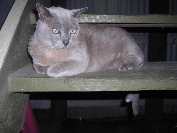 Mature, non-smoking pet/house sitter wanted. Must love cats and understands the whimsical lives of backyard chooks (hens).