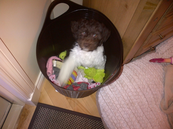 LOOKING AFTER MY PUPPY IN MY HOUSE