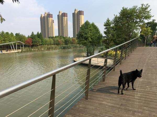 Housesitting assignment in Wuxiang, China