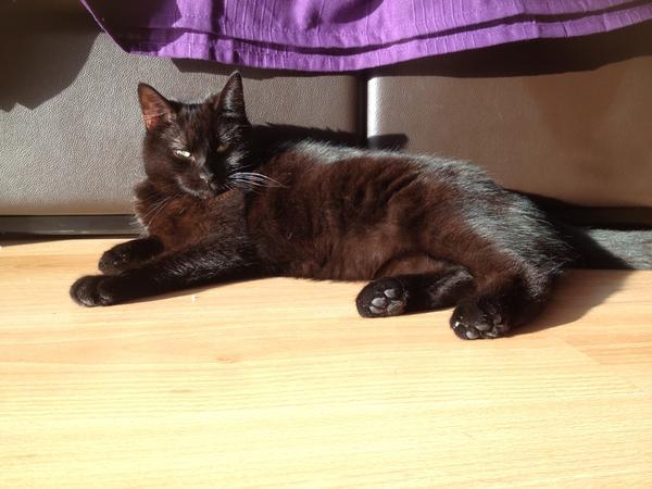Sweet kitty in Oxfordshire village seeks female sitter(s)