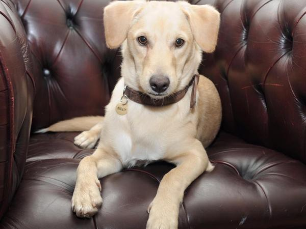 2 weeks in central London, near to Regents Park with a very cute dog!