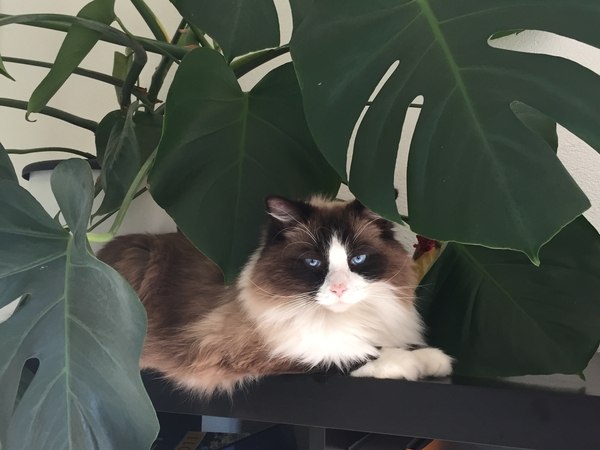 Housesit and look after 1 cat in Zurich, Switzerland July 22nd to 31st of July 2017