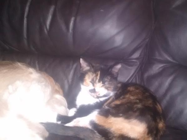 Housesitting assignment in Leek, United Kingdom
