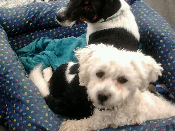 Pet Sitter for two small, fun, friendly dogs! Xmas time, near Orewa Beach