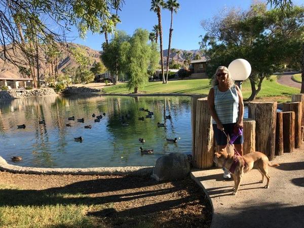 Housesitting assignment in Desert Hot Springs, California, United States