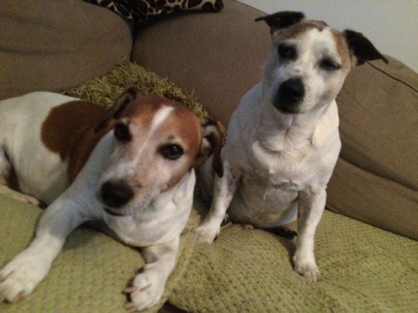 House/dog lover sitter