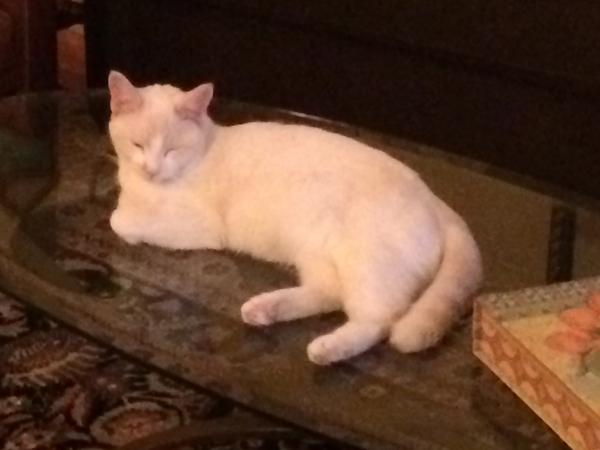Vacation exchange to London for 2 4y/o Flame-point Siamese  cats from 8/31 to 9/15 on NYC's Upper East Side