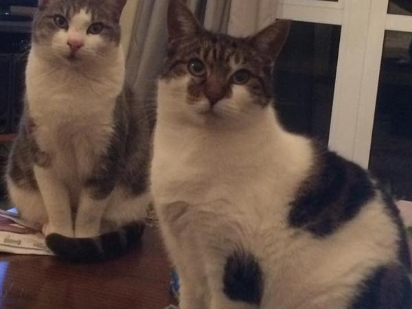 Someone to take care of my animals while I away in Europe needed  urgently