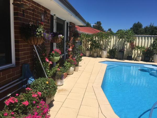 Housesitting assignment in Rockingham, Western Australia, Australia