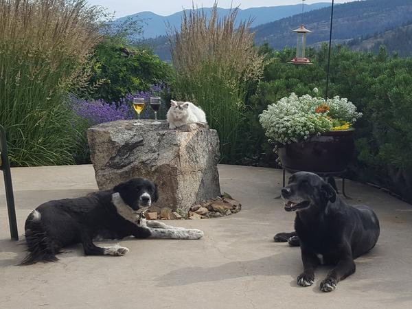 Housesitting assignment in Oliver, British Columbia, Canada