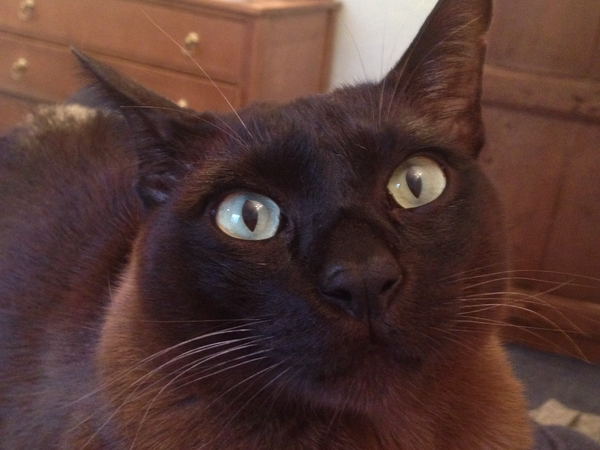 Cat who lives in a glorious location needs cuddly sitter for a fortnight