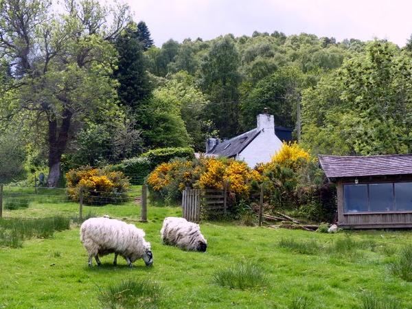Small cottage above Loch Ness with loving cat and three retired sheep