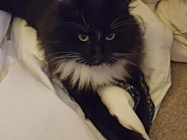 Looking for someone super caring for my cat