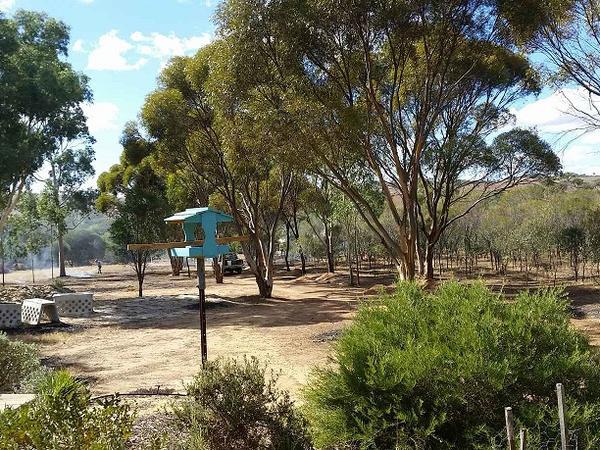 Housesitting assignment in Toodyay, WA, Australia