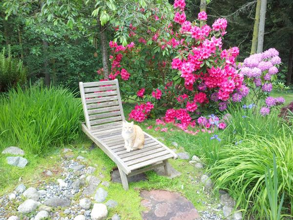 Housesitting assignment in Coupeville, Washington, United States
