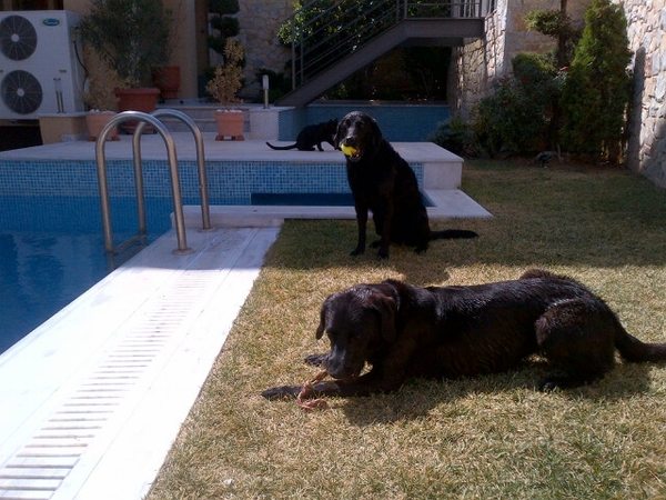 House and Dog sitters required in our house in Voula, Athens