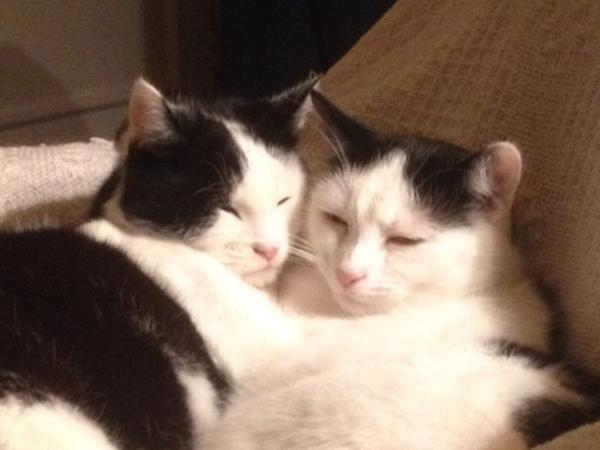 Pet sitter needed for 3 nights for my 3 cats in Bethnal Green,  East London