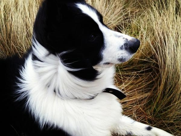 Pet sitters needed for 4 week stints in beautiful northern Lake District.