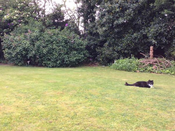 Housesitting assignment in Leigh, United Kingdom