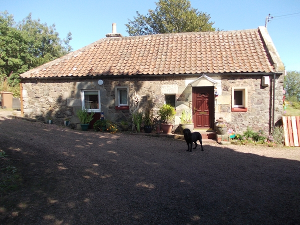 House and dog sitter required for 2 black lab,s in fife scotland