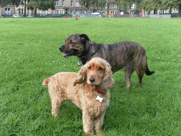 Summer 2016 with 2 loving dogs during the Edinburgh Fringe Festival