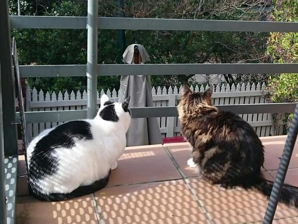 Housesitting assignment in Hawthorn East, VIC, Australia