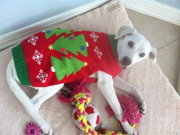 Warm your body and heart pet sitting our sweet dog in Texas