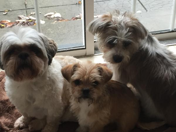 Housesitting assignment in Rathnew, Ireland