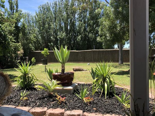 Housesitting assignment in Angaston, South Australia, Australia