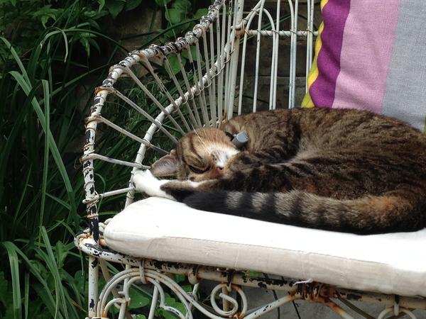 Quiet retreat in London garden flat, with a cat