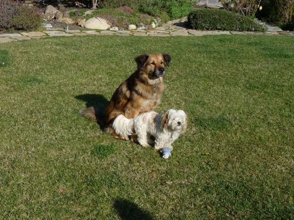 Pet/house sitter (2 dogs: medium/large 8 yr old and small 3 yr old)