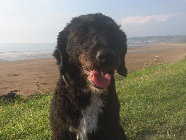 Housesitting assignment in Wells, United Kingdom