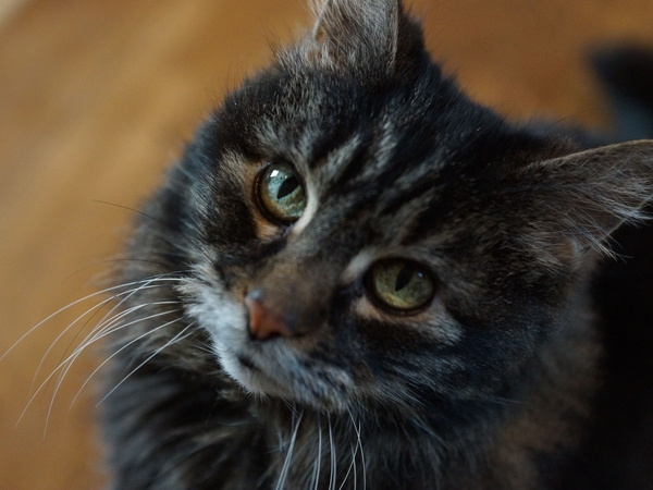 Sitter/s Needed for Large Lincolnshire House & 2 Beautiful Cats