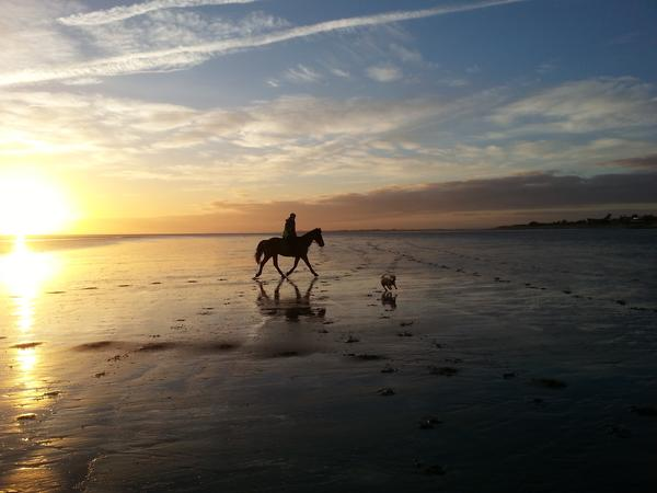 Housesitting assignment in West Wittering, United Kingdom