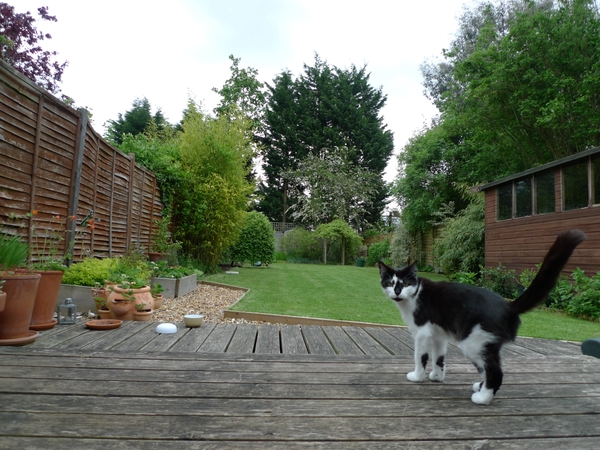 Looking for Cat Sitter in a lovely home in Cambridge.