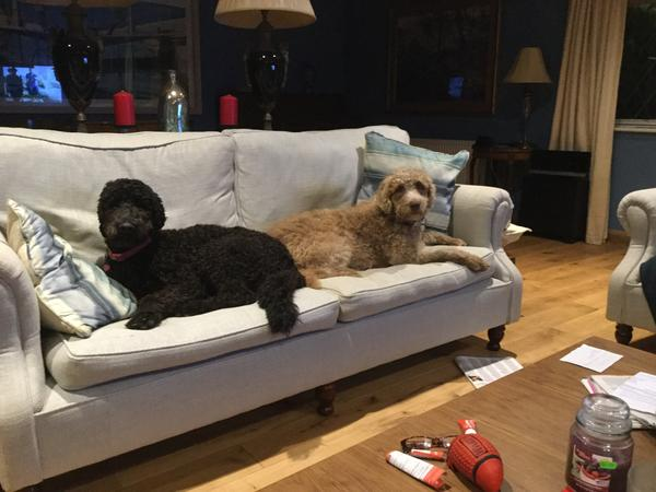 I live in Monkstown near the sea in a old restored house. I have two dogs a mother and daughter who are very friendly and love people and others dogs but do not like kennels. I am looking for a kind person to move into my house while I'm away and treat the house and the dogs as their own.