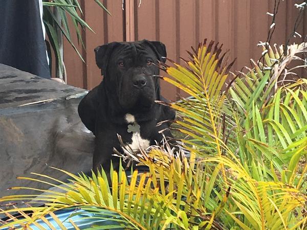 Housesitting assignment in Beverly Hills, NSW, Australia