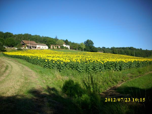 Housesitting assignment in Montagudet, France