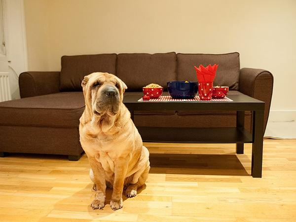 Responsible house and dog sitter needed 12-17 October for a cute Shar-Pei in a 1-bed flat in SW London