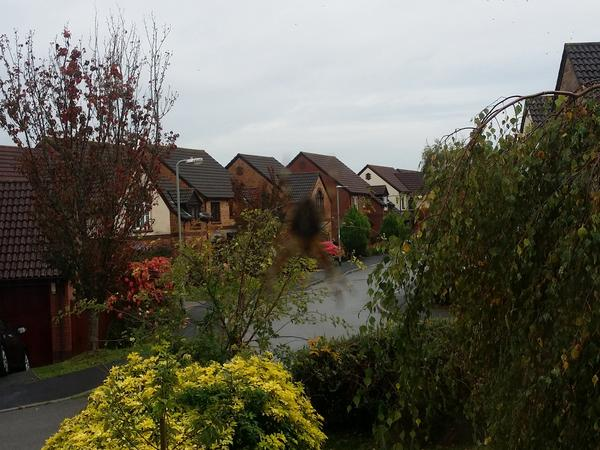 Housesitting assignment in Exminster, United Kingdom