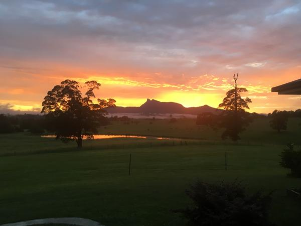 Housesitting assignment in Murwillumbah, New South Wales, Australia