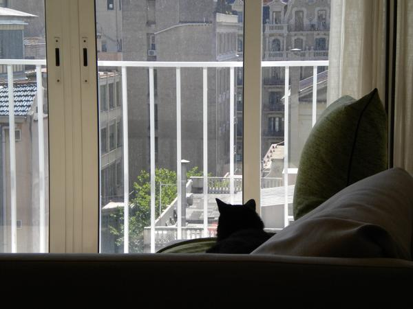 Pet sitter needed for 2 cats September 4th thru 21st,, 2017 in downtown Barcelona